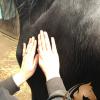MLD: Manuele LymfeDrainage voor paarden